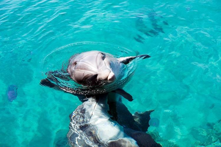 Delfinų rifas Eilate