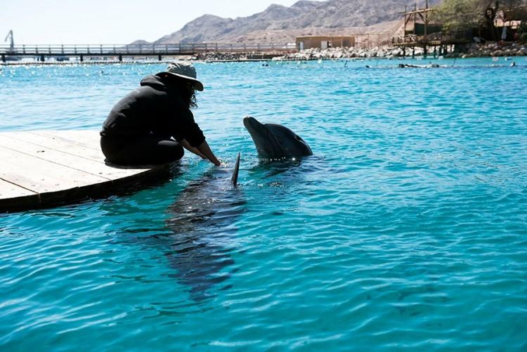 Delfinų rifas, Eilatas