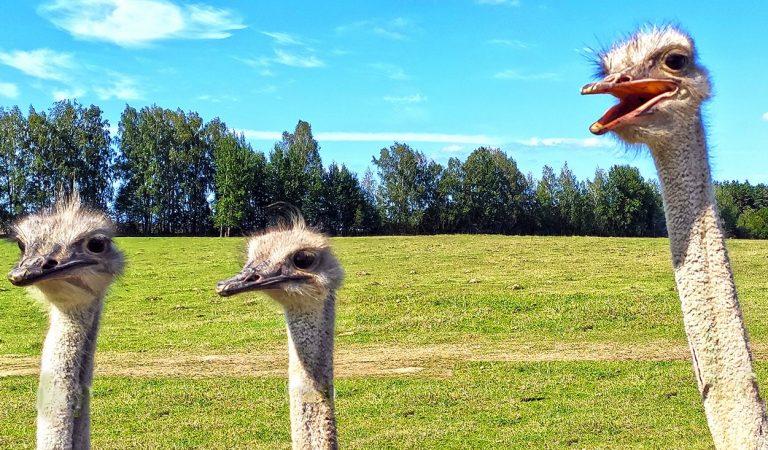 Safari parkas Lietuvoje. Safaris Anykščiuose